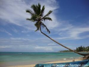 Beach palm tree las Terrenas