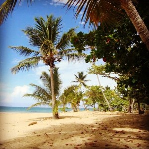 To read a book in the shade of a palm tree on a deserted beach is pure heaven. #caribbean #dominicanrepublic #lasterrenas #instatravel #travelblogger #travel #palmtrees #beach #beautiful #livingthedream