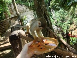 monkey jungle feeding